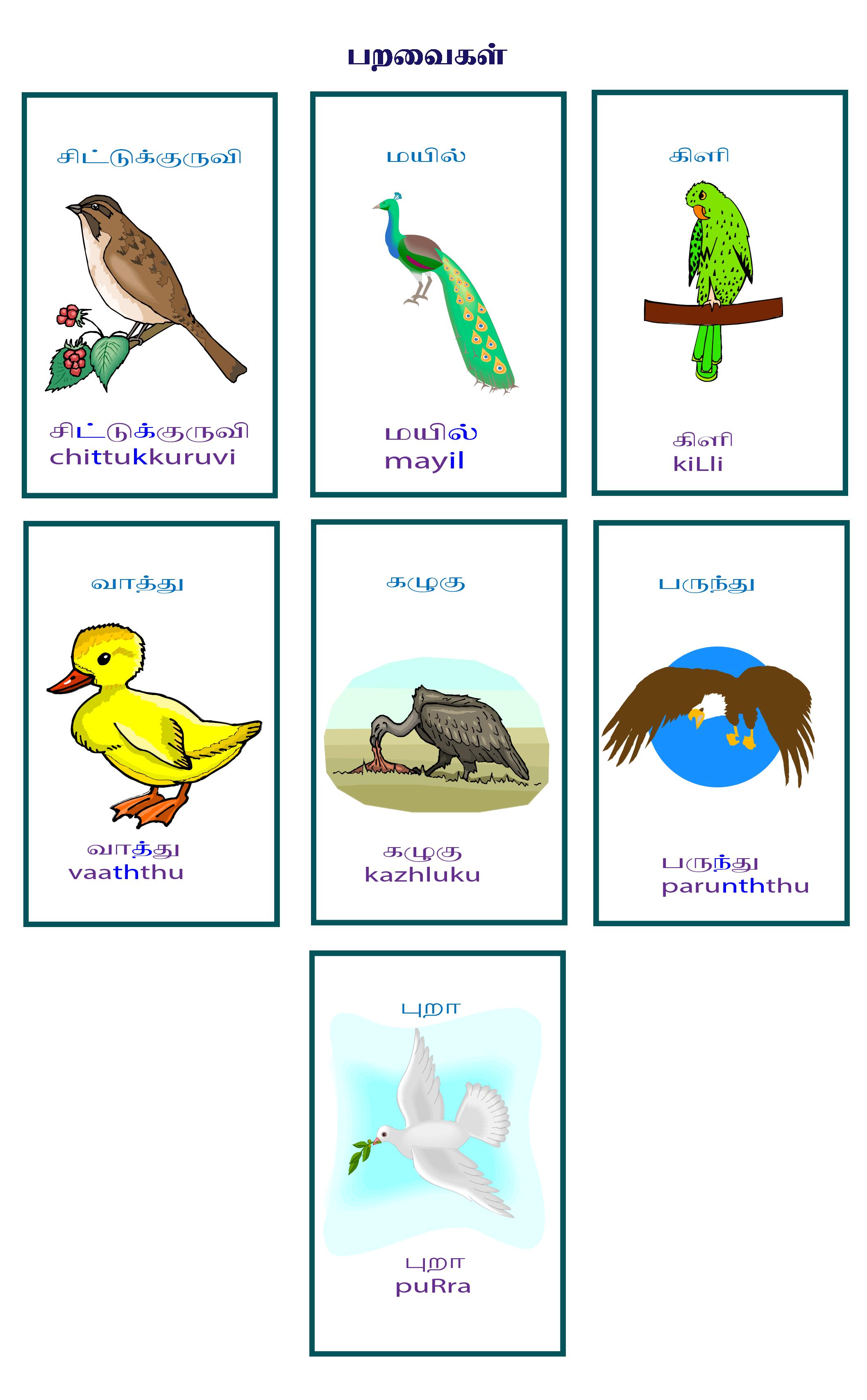 பறவைகள் தமிழ்  சொற்களஞ்சியம்-  flashcards